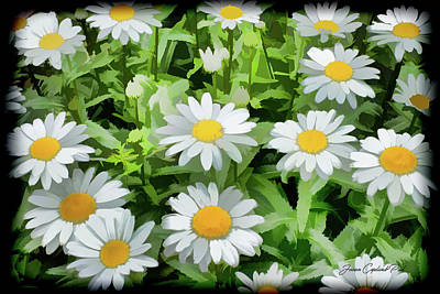 Photograph - White Shasta Daisies  by Joann Copeland-Paul