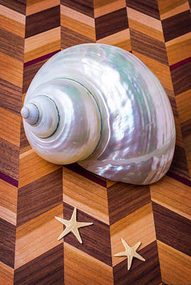 White Shell And Starfish Art Print by Garry Gay