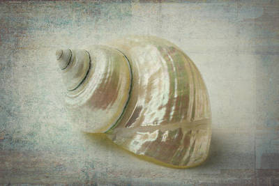 White Shell Art Print by Garry Gay