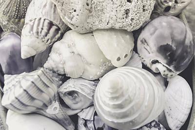 White Shells Art Print by Colleen Kammerer