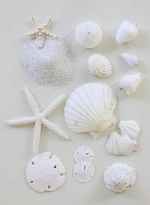 White Shells Art Print by Daniel Hurst Photography