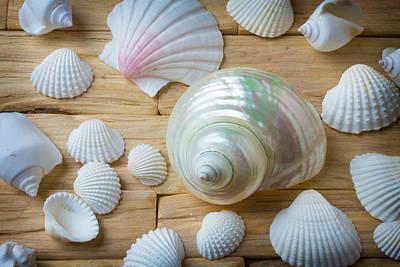 White Snail Seashell Art Print by Garry Gay