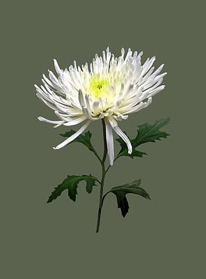 Photograph - White Spider Mum by Susan Savad