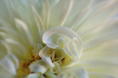 Photograph - White Spiral by Mary Jo Allen