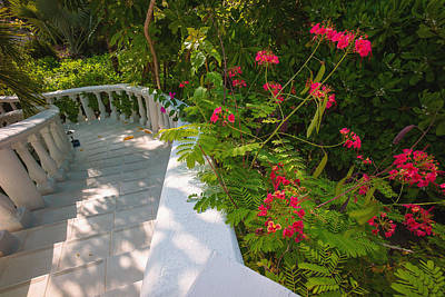 Photograph - White Staircase And Tropical Plants by Judith Barath