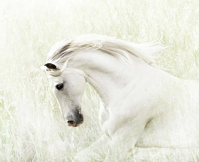 Digital Art - White Stallion by Melinda Hughes-Berland