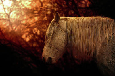 Photograph - White Stallion by Ryan Courson