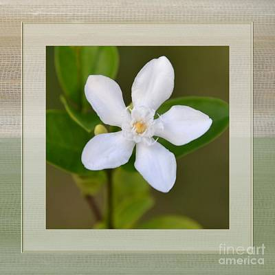Photograph - White Star Flower by Darla Wood