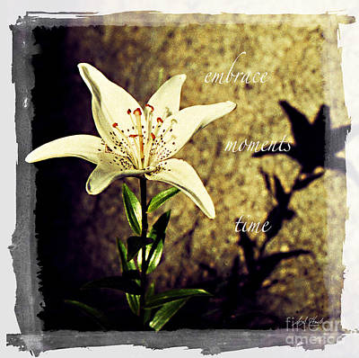 Photograph - White Star Lily, Embrace, Moments, Time by Sueann Hack