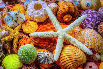 Photograph - White Starfish And Seashells by Garry Gay