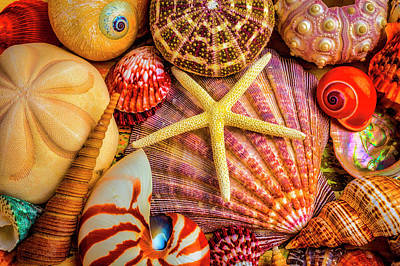 Photograph - White Starfish On Colorful Seashells by Garry Gay
