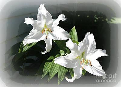 Lilies Photograph - White Stargazer Lilies  by Carol Groenen