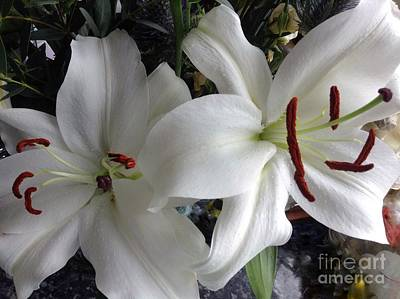 Photograph - White Stargazers by Joan-Violet Stretch