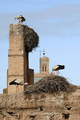 Moroccan Photograph - White Storks Nesting by Chris Hellier