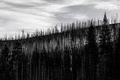 Photograph - White Stripe by Davin McLaird