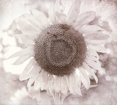 White Sunflower Square Art Print by Terry DeLuco
