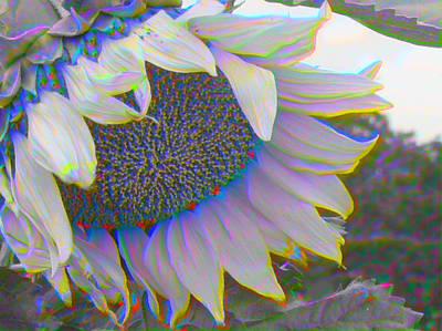 White Sunflower Art Print by Vicky Brago-Mitchell