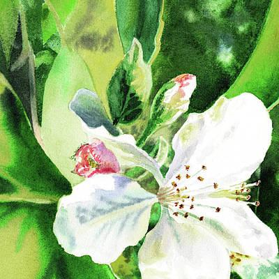 Painting - White Sunlit Blossoms  by Irina Sztukowski