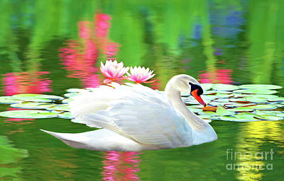 Pink Water Lily Photograph - White Swan by Laura D Young