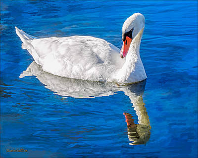 Mute Swan Photograph - White Swan by LeeAnn McLaneGoetz McLaneGoetzStudioLLCcom