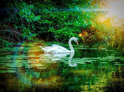 Photograph - White Swan by Lilia D