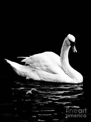 Staff Picks Judy Bernier - White Swan by Roselynne Broussard