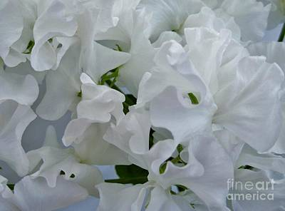 Photograph - White Sweetpeas by Joan-Violet Stretch