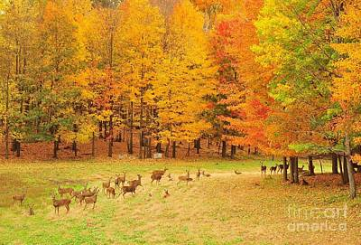 White Tail Deer Herd Art Print by Terri Gostola