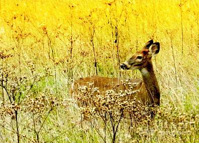 White Tail Doe On Alert Art Print