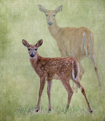 Photograph - White Tail Fawn by Angie Vogel