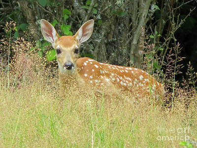 Photograph - White-tail Fawn Id by Cindy Murphy - NightVisions
