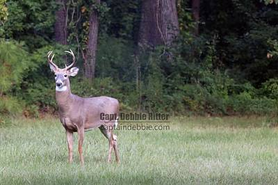 Photograph - White Tailed Buck 2434 by Captain Debbie Ritter