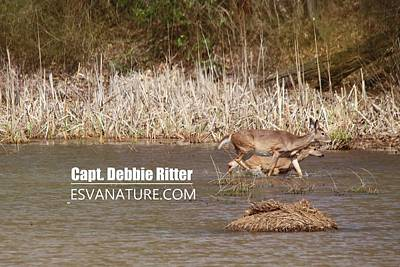 Photograph - White Tailed Deer 8391 by Captain Debbie Ritter