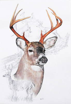 White-tailed Deer Art Print by Barbara Keith