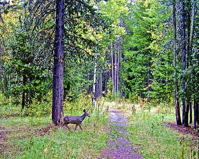 Photograph - White-tailed Deer In Grand Tetons National Park, Wyoming by Ruth Hager