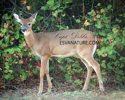 Photograph - White Tailed Deer In Grapevine by Captain Debbie Ritter
