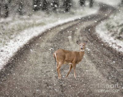 Bath Time - White Tailed Deer by Kathleen Rinker