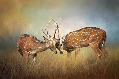 Roaring Red - White-tailed deer fight by Diana Van Tankeren