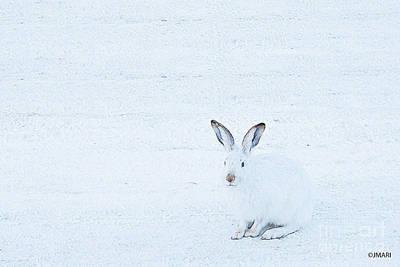 Photograph - White-tailed Jack Rabbit  by Jacquelinemari
