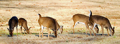 Photograph - White Tails Up by Michelle McPhillips
