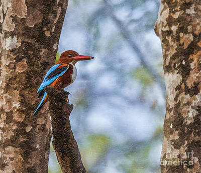 Digital Art - White-throated Kingfisher, Halcyon Smyrnensis by Liz Leyden