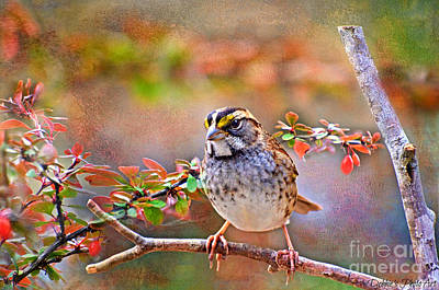 Photograph - White Throated Sparrow 1 by Debbie Portwood
