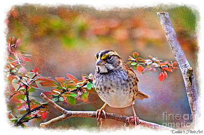 Photograph - White Throated Sparrow 2 by Debbie Portwood