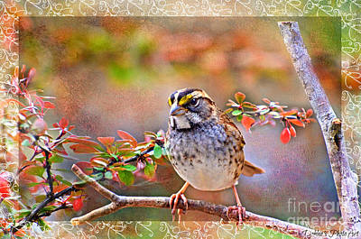 Photograph - White Throated Sparrow 3 by Debbie Portwood