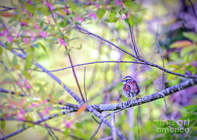 White-throated Sparrow Photograph - White-throated Sparrow Surrounded By Spring by Kerri Farley
