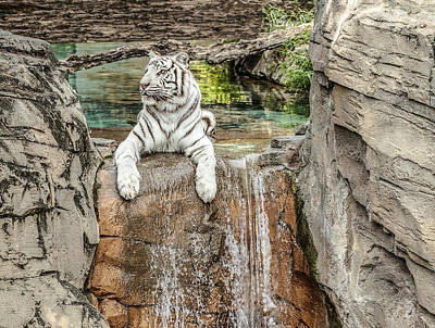 Photograph - White Tiger by Al Hurley