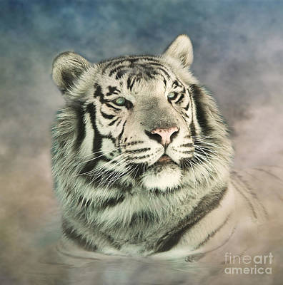 Photograph - White Tiger Digitally Painted Photograph by Clare VanderVeen