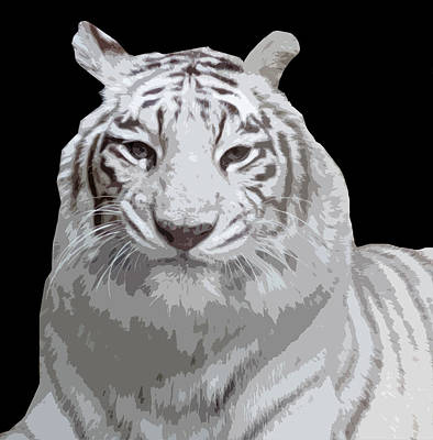 Photograph - White Tiger by Laurel Powell