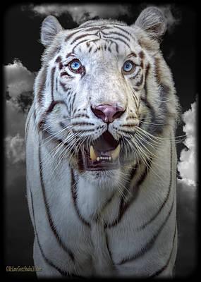 Photograph - White Tiger by LeeAnn McLaneGoetz McLaneGoetzStudioLLCcom
