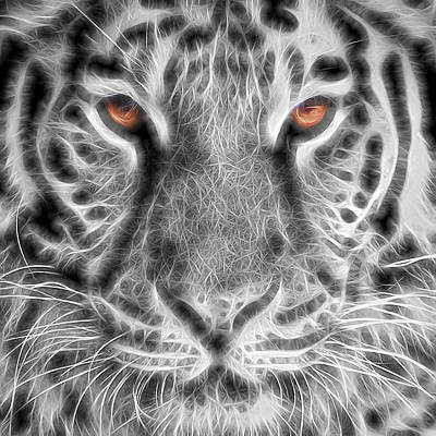 White Tiger Art Print by Tom Mc Nemar
